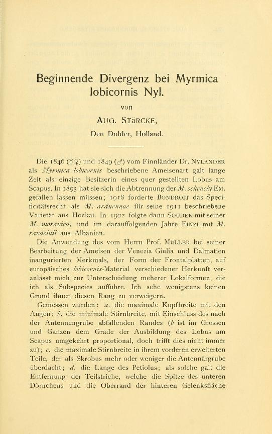 Beginnende Divergenz bei <i>Myrmica lobicornis </i>Nyl.